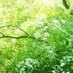 慢性前立腺炎は治りますか?